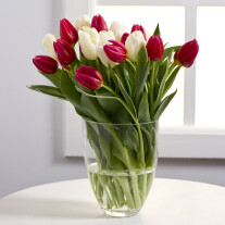 Bouquet of White and Red Tulips