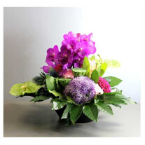 Arrangement of Cut Flowers pink mixed